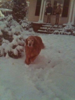 Garber's dog,Ginger in snow